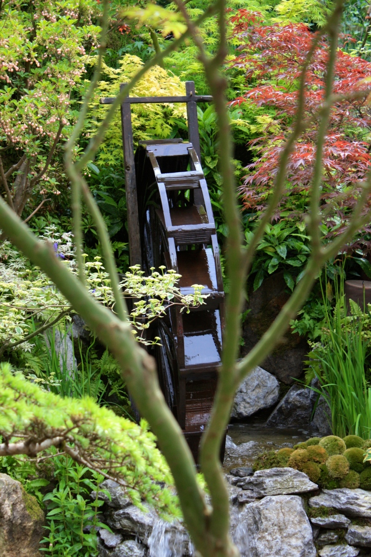 A miniature waterwheel from between the boughs of an acer