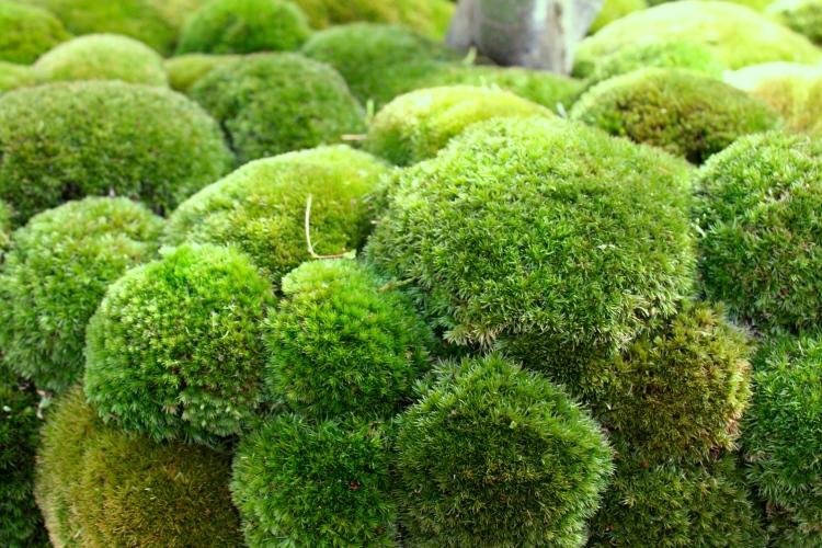 Detail of moss in Kasuyuki Ishihara's 2014 Chelsea Garden