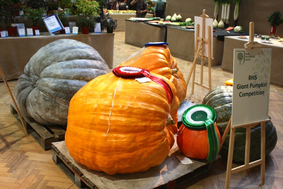 Prize winning pumpkins, RHS Autumn Harvest Show 2014