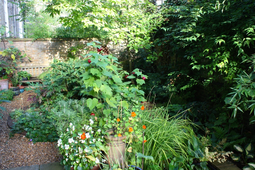 Begonias, nasturtiums and Abutilon 'Nabob' are still going strong despite the cooler nights