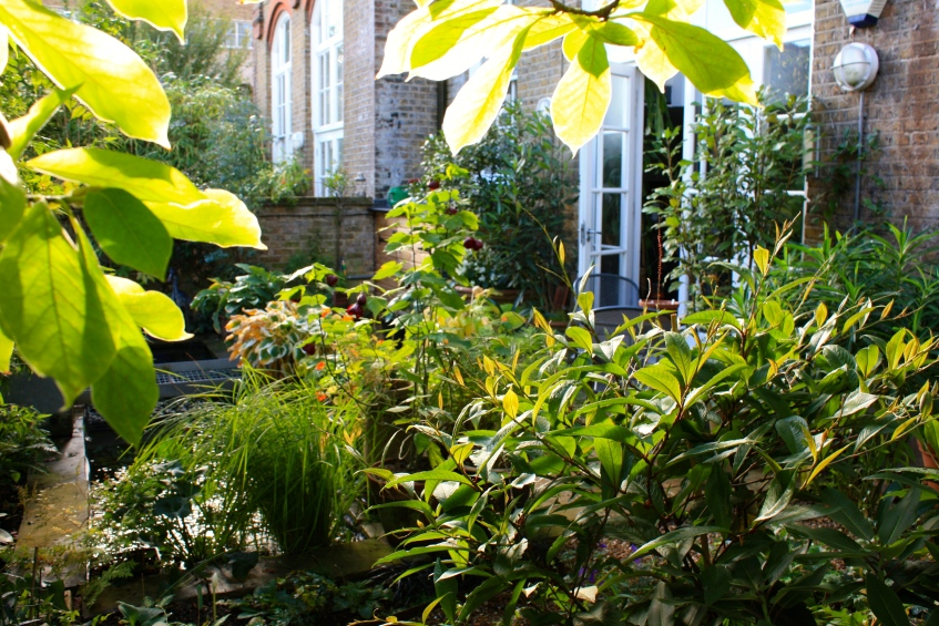 Viewed from the beneath the magnolia, our little garden is bathed in soft golden light