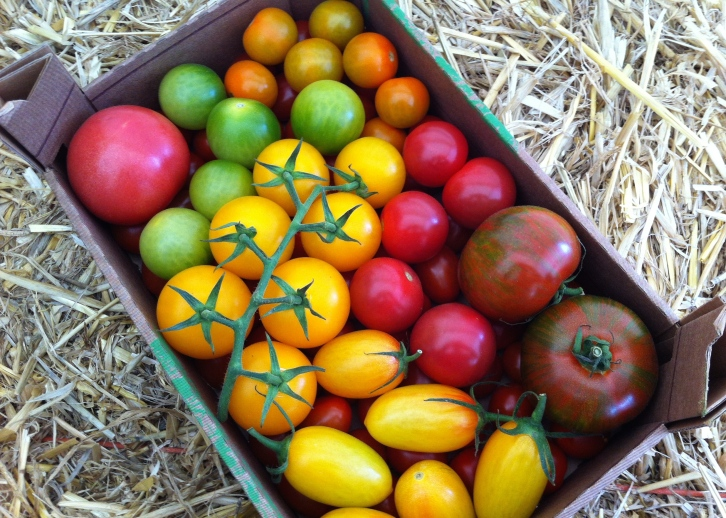 A tempting trug of Thanet-grown tomatoes