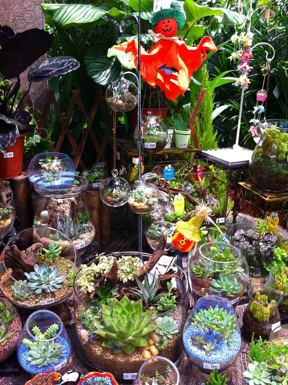Halloween is becoming more and more popular in Hong Kong, although the relationship to succulent plants isn't clear!