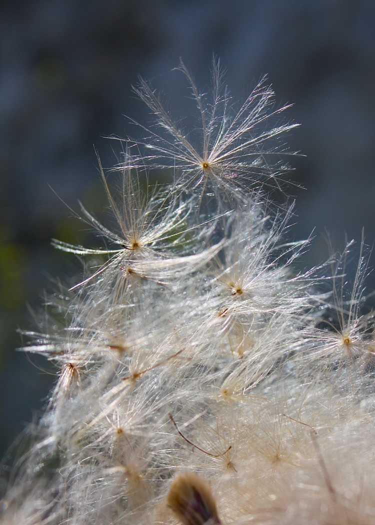 Thistledown, Broadstairs