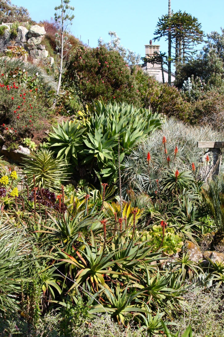 Aloes and agaves are much tougher than they look. It's cold and wet together they detest