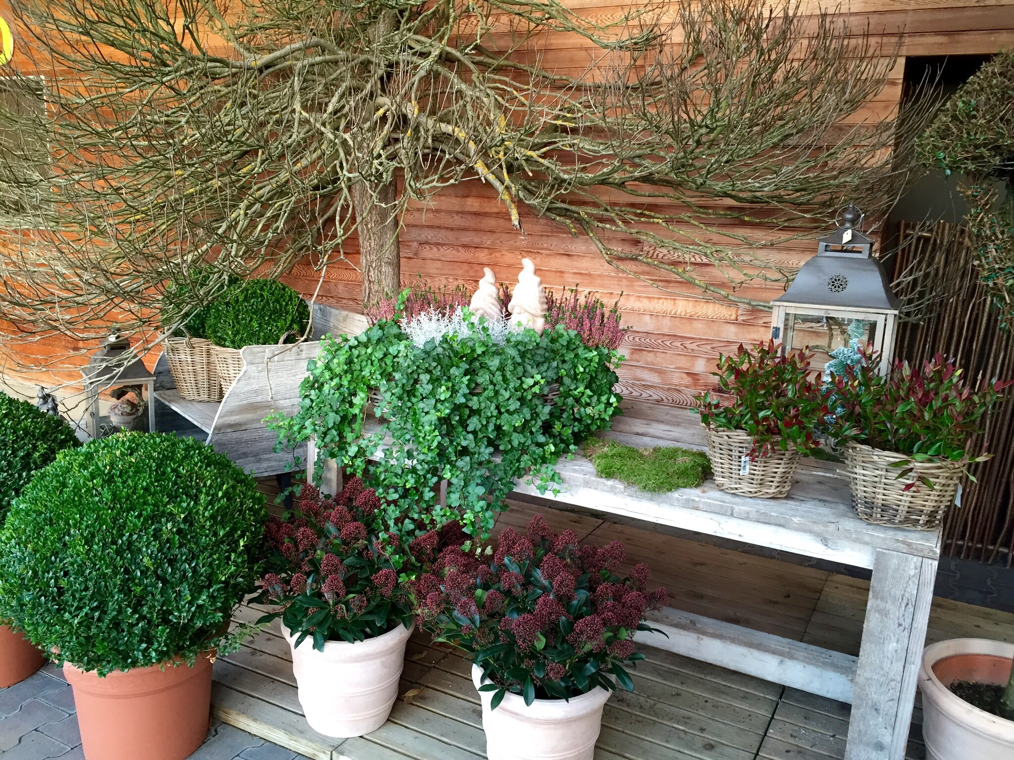 Planting Containers for Winter Colour – The Frustrated Gardener