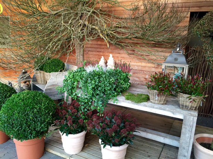 A display of pots and baskets planted simply for winter colour