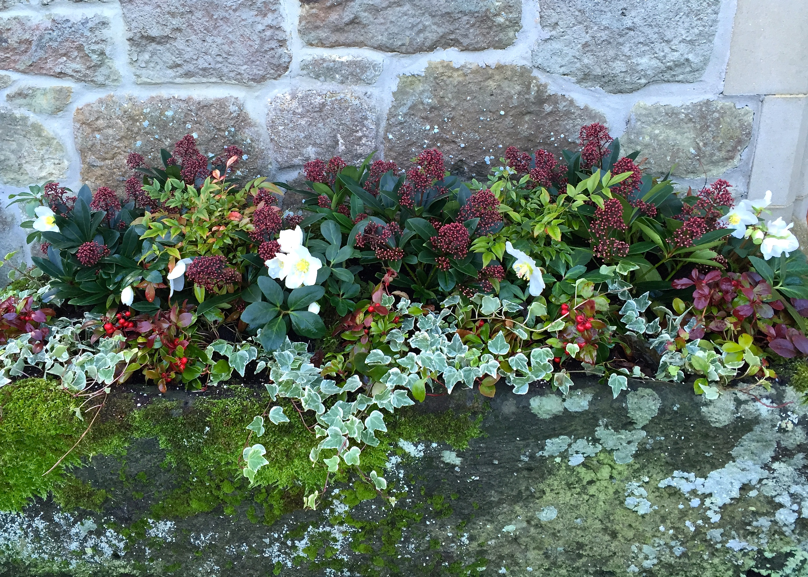 The Frustrated Gardener & Planting Containers for Winter Colour \u2013 The Frustrated Gardener