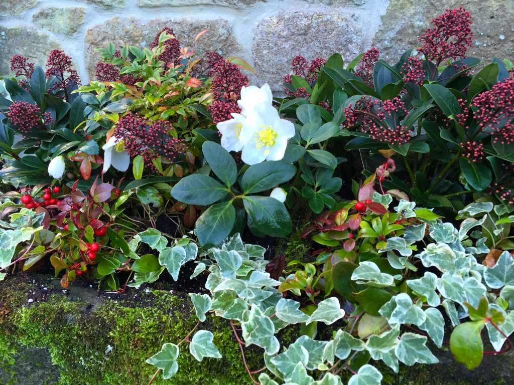Planting Containers For Winter Colour The Frustrated