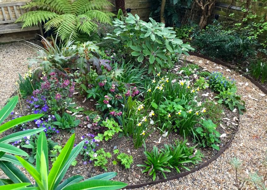 The woodland garden springs back into life