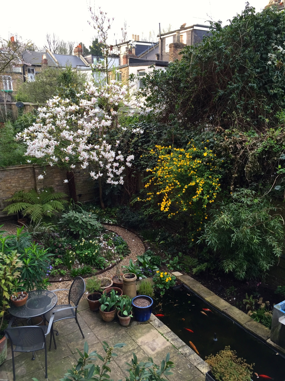 Our London garden, seen from above