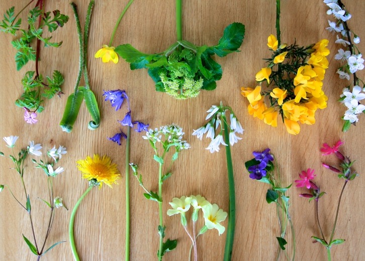 Wild flowers of Cornwall, April 2015