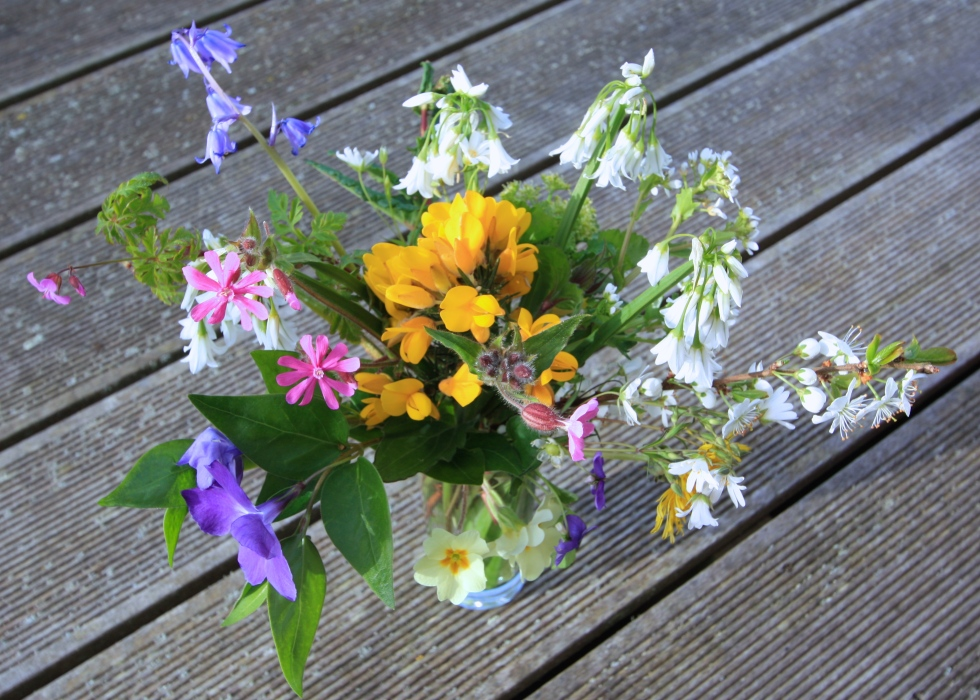 Cornish Wild Flowers, April 2015