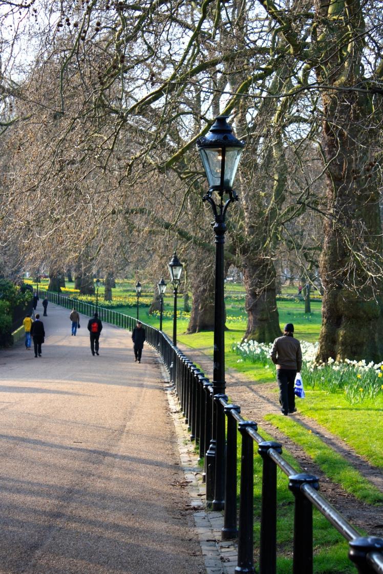 Daffodils, Green Park, London, March 2015