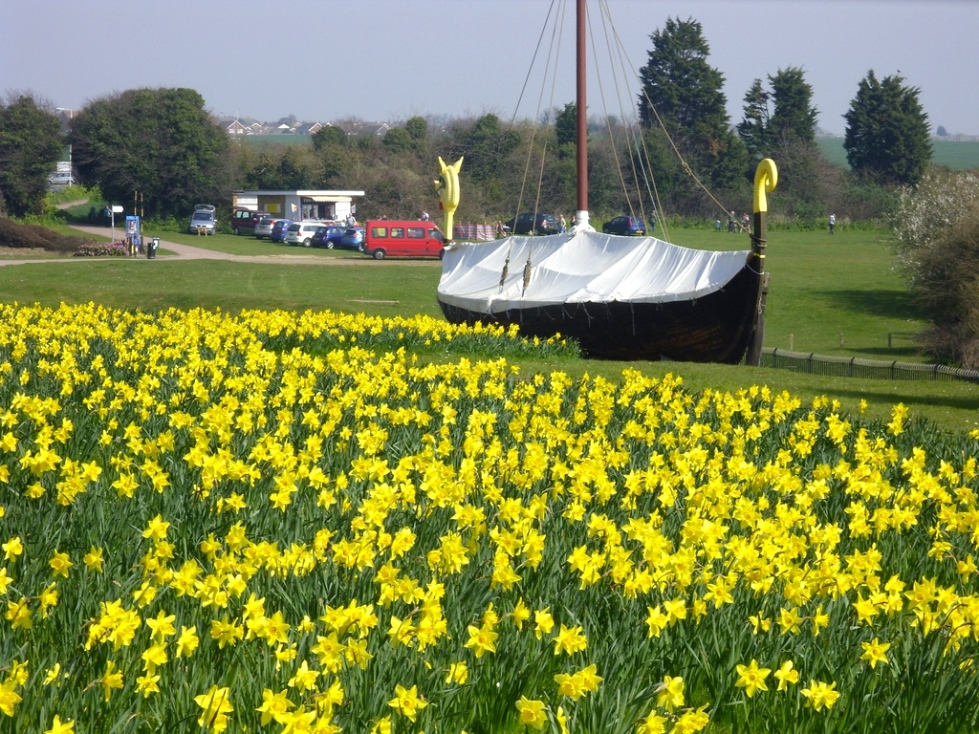 Pegwell Bay daffodils