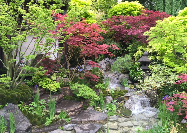 Mr Kazuyuki's garden photographed straight on