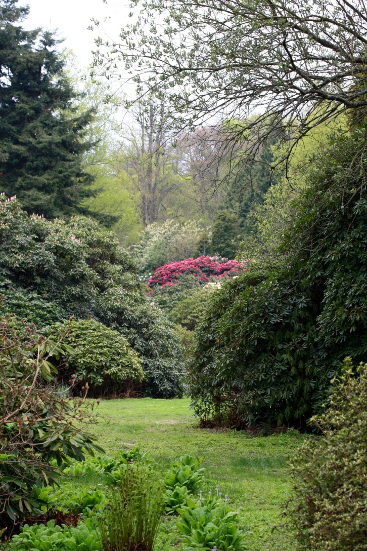 The American Garden, Saltwood, May 2015