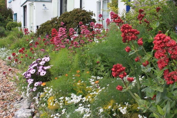 Garden flowers, KIngsdown, Kent, May 2015