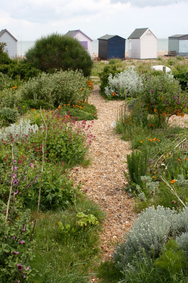 Shoreline garden, Kingsdown, Kent, May 2015