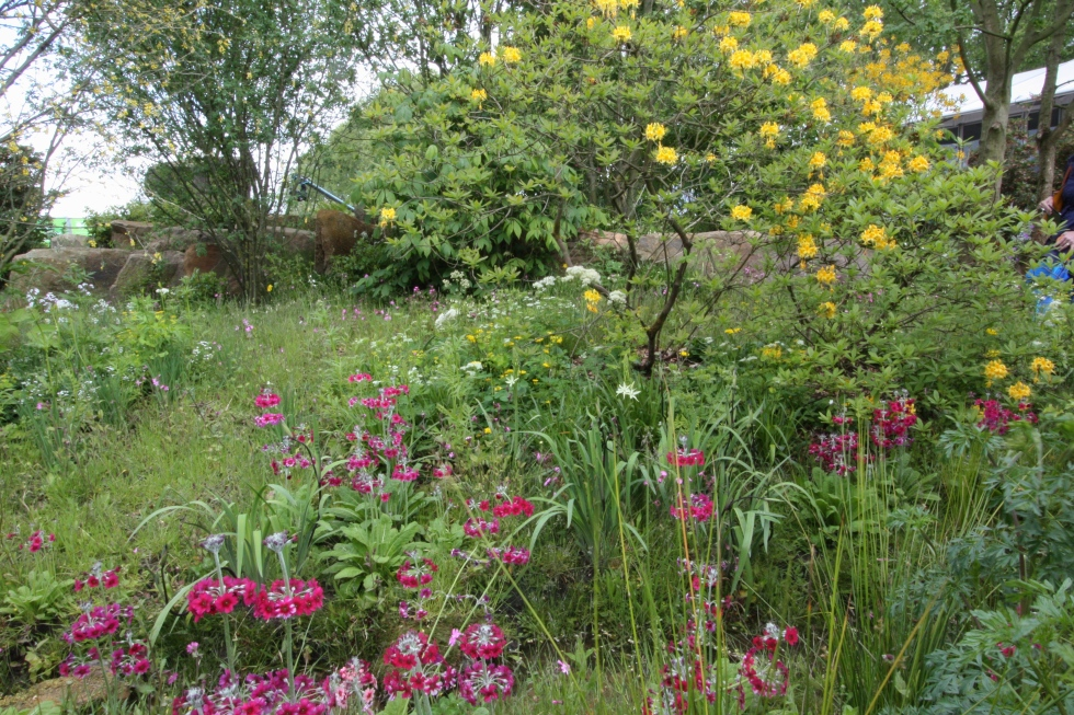 A grassy bank strewn with red campion, troillius, irises and primulas