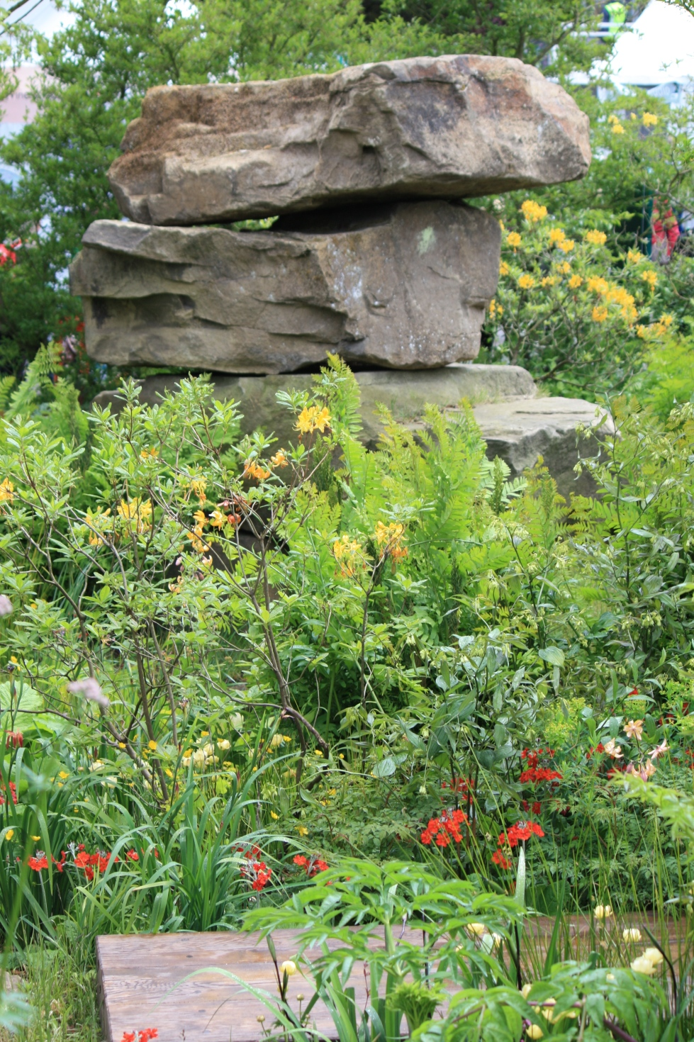 Rocks surrounded by the fragrant flowers of Rhododendron luteum