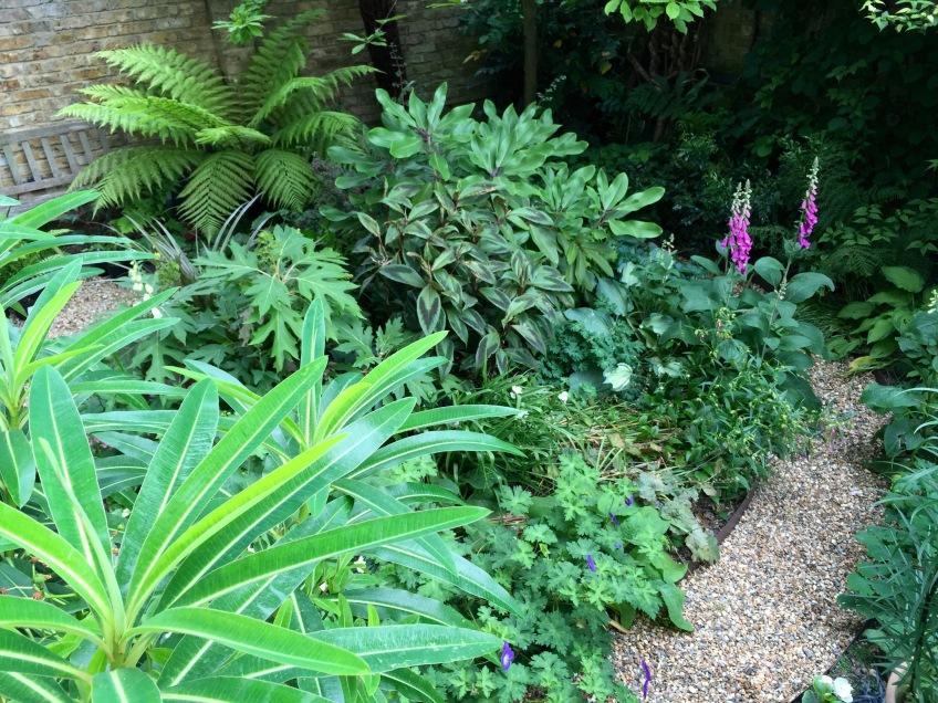 Foliage textures, Our London Garden,  June 2015