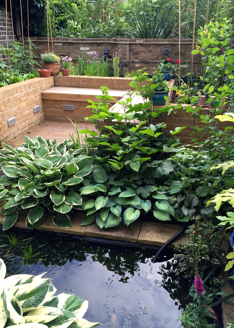 Vegetable garden from across the pond, London, June 2015