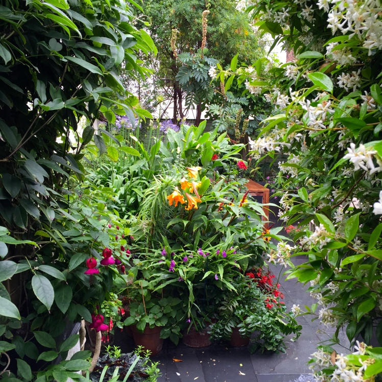 A view of The Watch House garden from the passageway