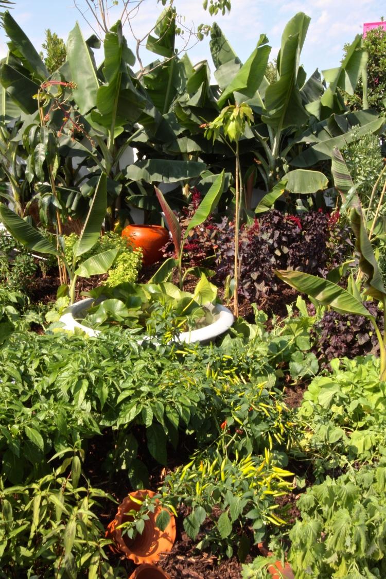 True Fair: Sri Lanka Tranquility Garden, Hampton Court 2015