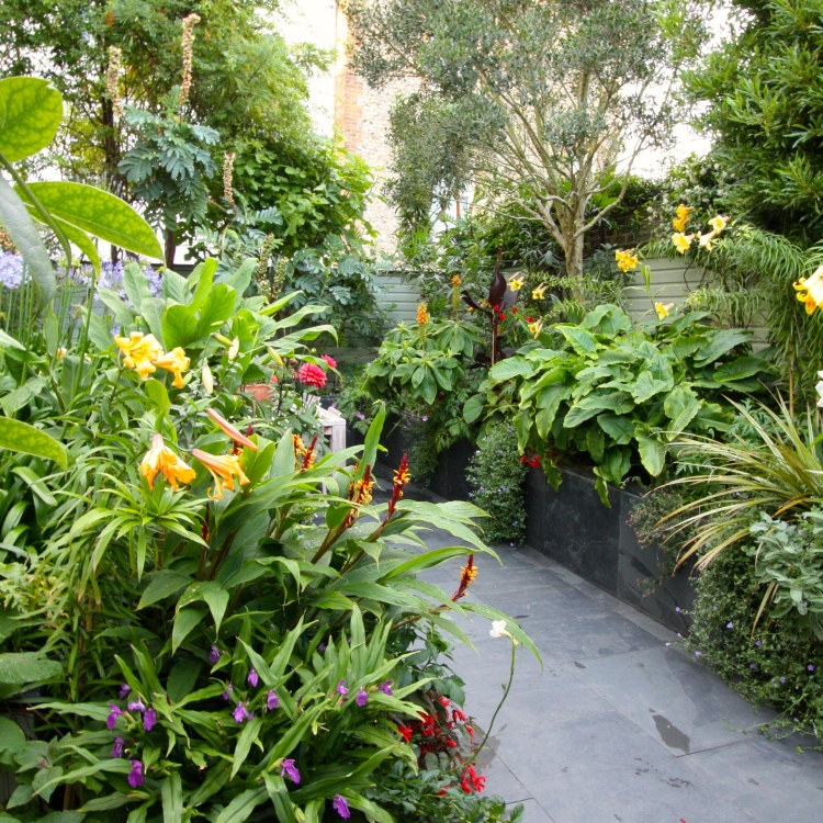 The Watch House garden, July 2015
