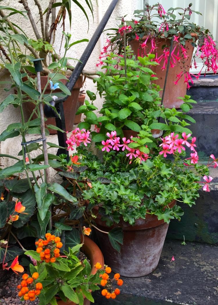 Pots on the front door steps