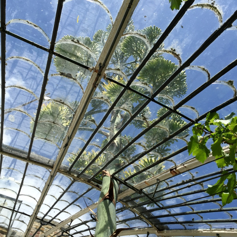 Looking up at the flower spike through the fine glass roof