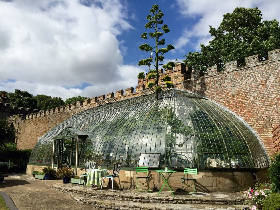 The Italianate Greenhouse, Ramsgate, August 2015