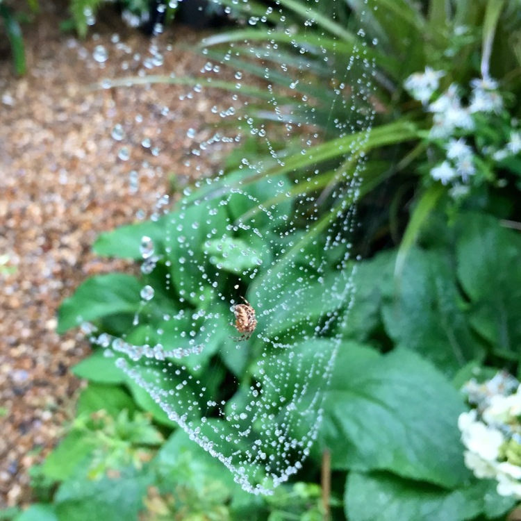 Spider's web, London, August 2015