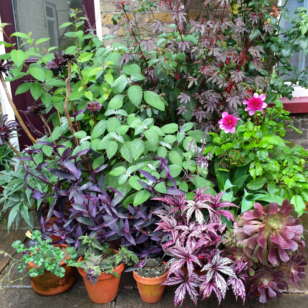 A collection of foliage plants almost obscure the front door at Polegate Cottage