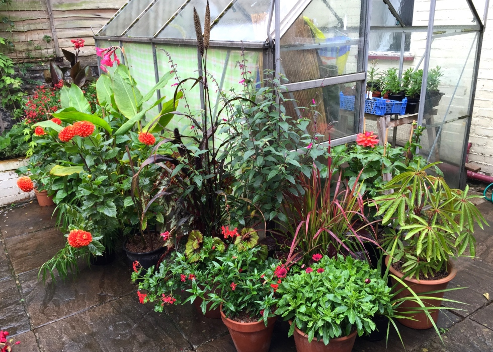 Plants disguise our rather utilitarian and unloved greenhouse