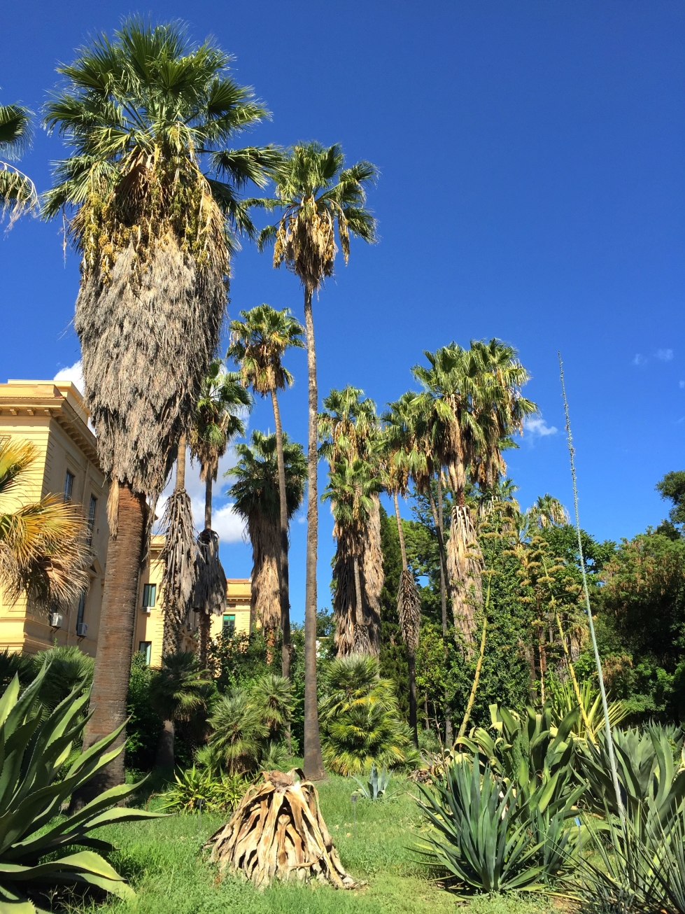 Shaggy palms add to the Jurrasic feel of the garden