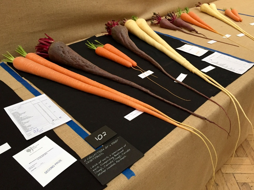 From left to right, Carrot 'New Red Intermediate', Long Beet 'Regar', Carrot 'Sweet Candle', Long Beet 'Regar' and Parsnip 'Victor'