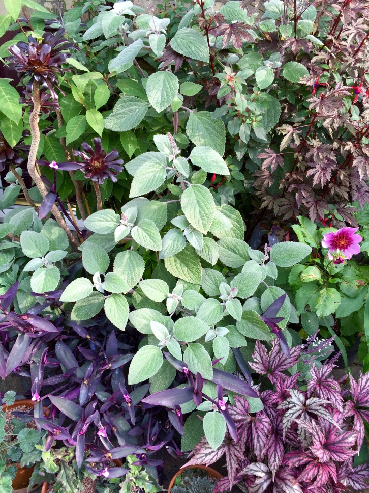 A tapestry of purples and minty greens