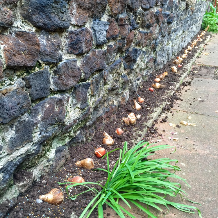 A dressing of grit and slow-release fertiliser will help bulbs get off to a good start.