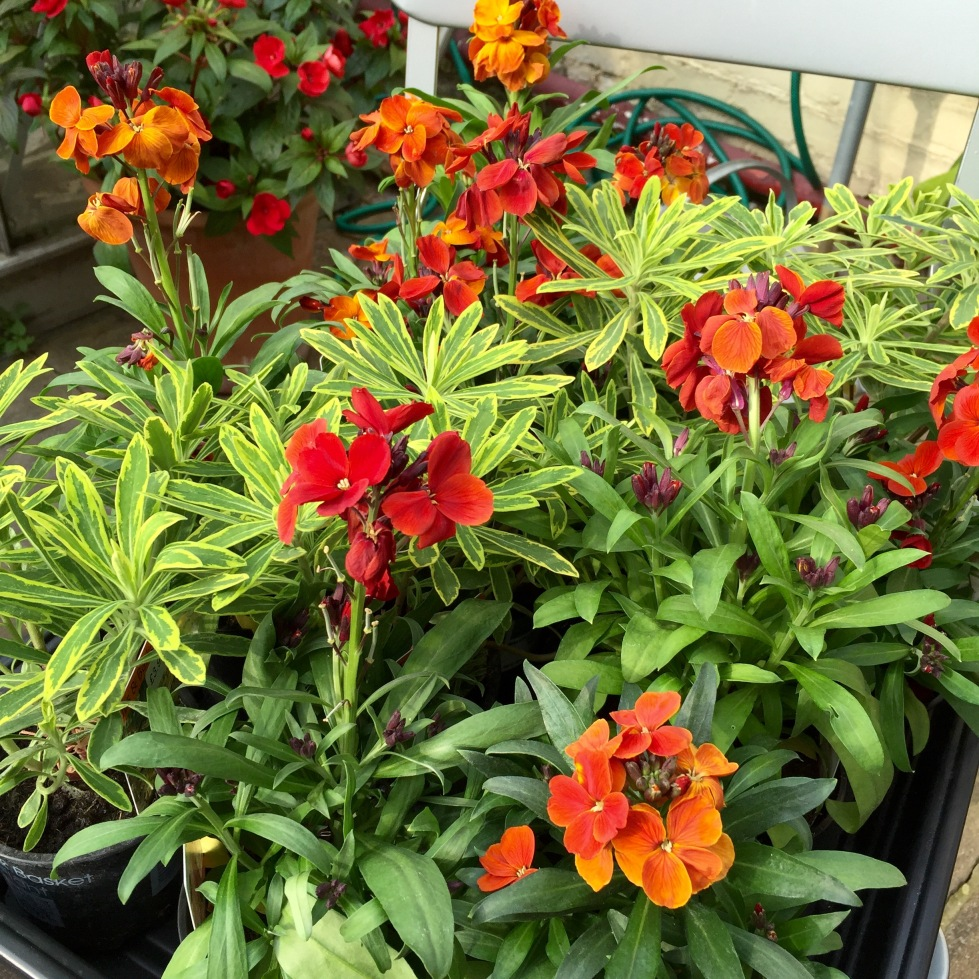 Gold and orange tones will brighten the garden on the darkest of days