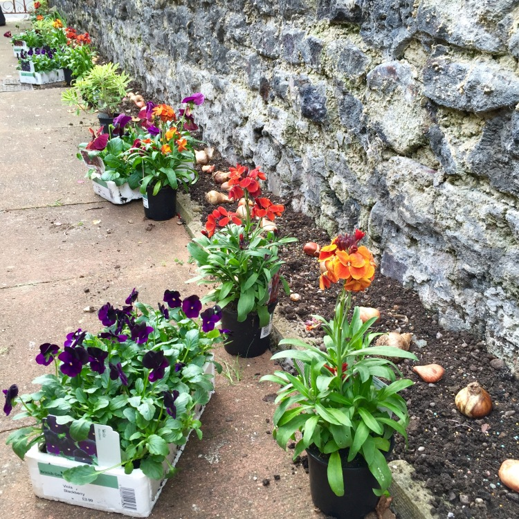 Setting out bedding plants before planting allows you to make adjustments to your scheme