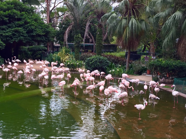 Flamingos are some of the park's many exotic feathered residents