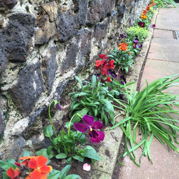 Planting in early October will allow the bedding to establish before the first frosts arrive