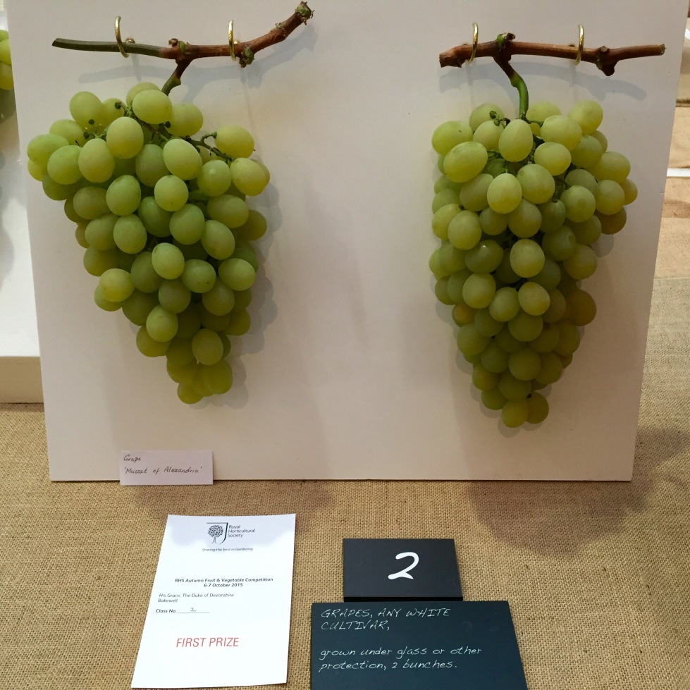 The Duke of Devonshire takes first prize with 'Muscat of Alexandria'. Wine experts believe it is one of the oldest genetically unmodified grape varieties in existence