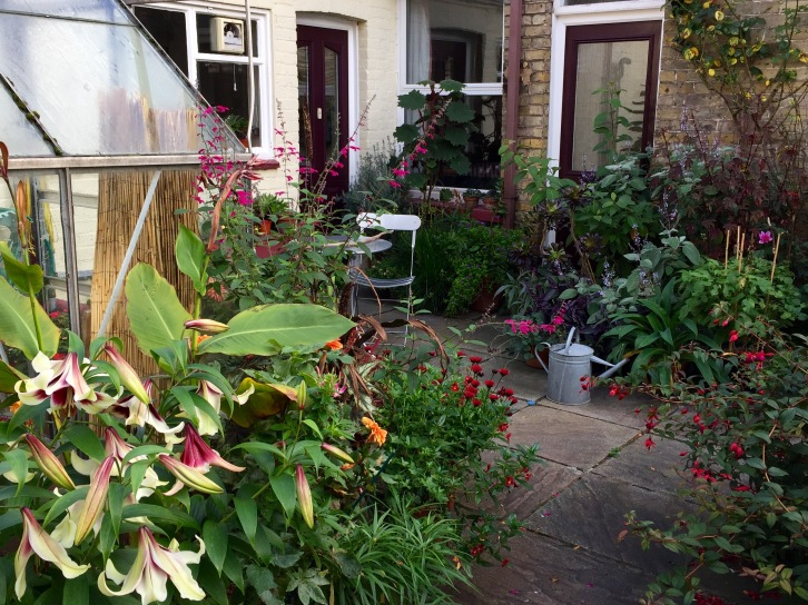 The garden at Polegate Cottage, scarcely recognisable from when we took possession in June