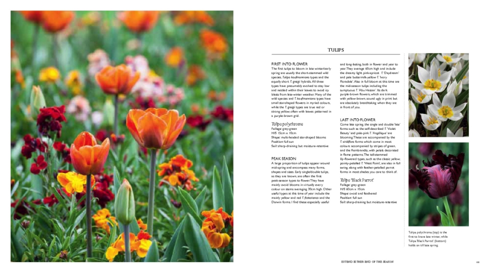 365 Days of Colour in Your Garden, Nick Bailey, Jonathan Buckley, Kyle Books