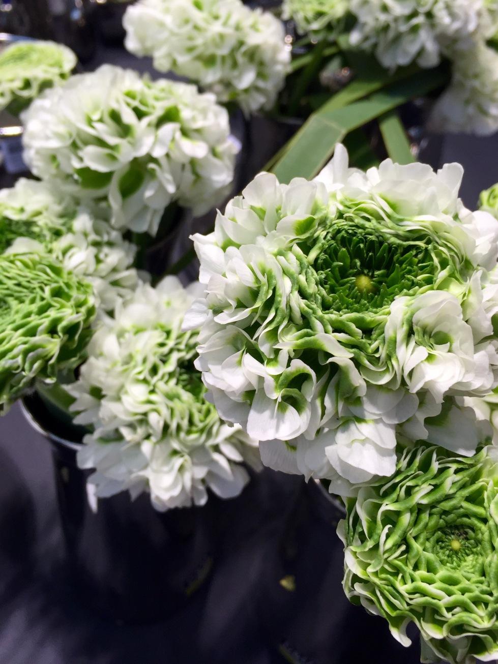 Pon-Pon Ranunculus 'Igloo'