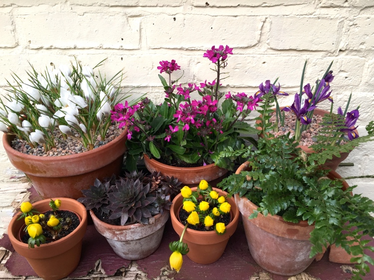 A collection of colourful spring flowers outside Polegate Cottage on the first day of spring