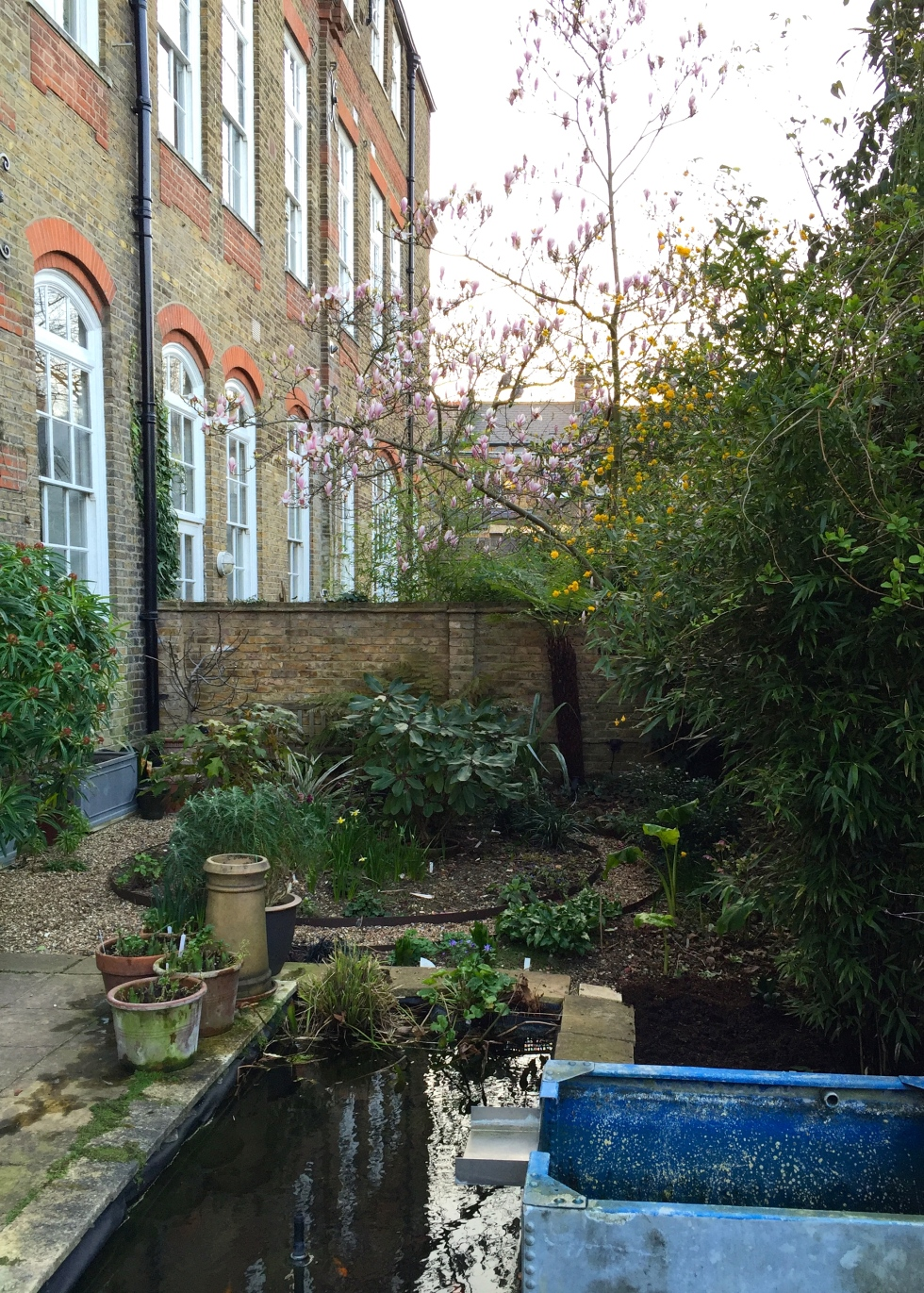 Our London Garden, March 2016